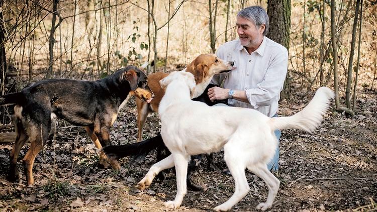 Exterminator Pest Control Bug Free Service Tulsa Oklahoma Dogs Fleas