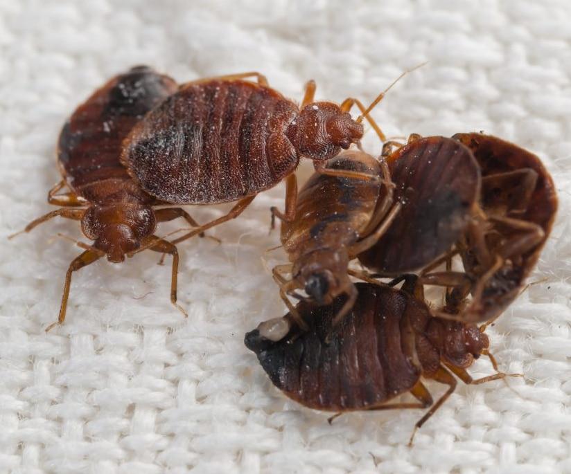 Exterminator Pest Control Bed Bug Free Service Tulsa Oklahoma