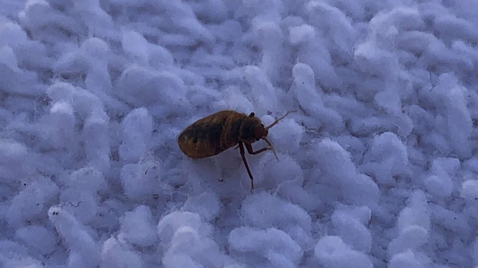 Bed Bugs Can Hide Anywhere