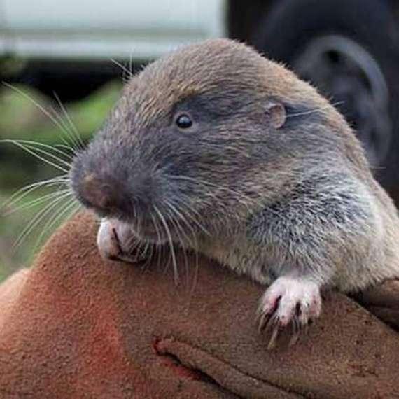Exterminator Pest Control Bug Free Rodent Service Tulsa Oklahoma Rat Mouse