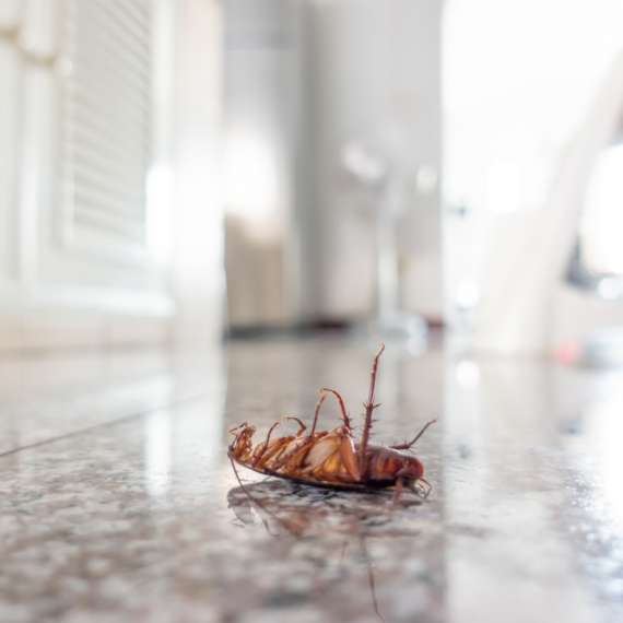 Exterminator Pest Control Bug Free Cockroach Tulsa Oklahoma