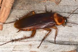 A Roach on Wood