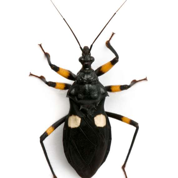 Exterminator Pest Control scorpion Bug Free Service Tulsa Oklahoma