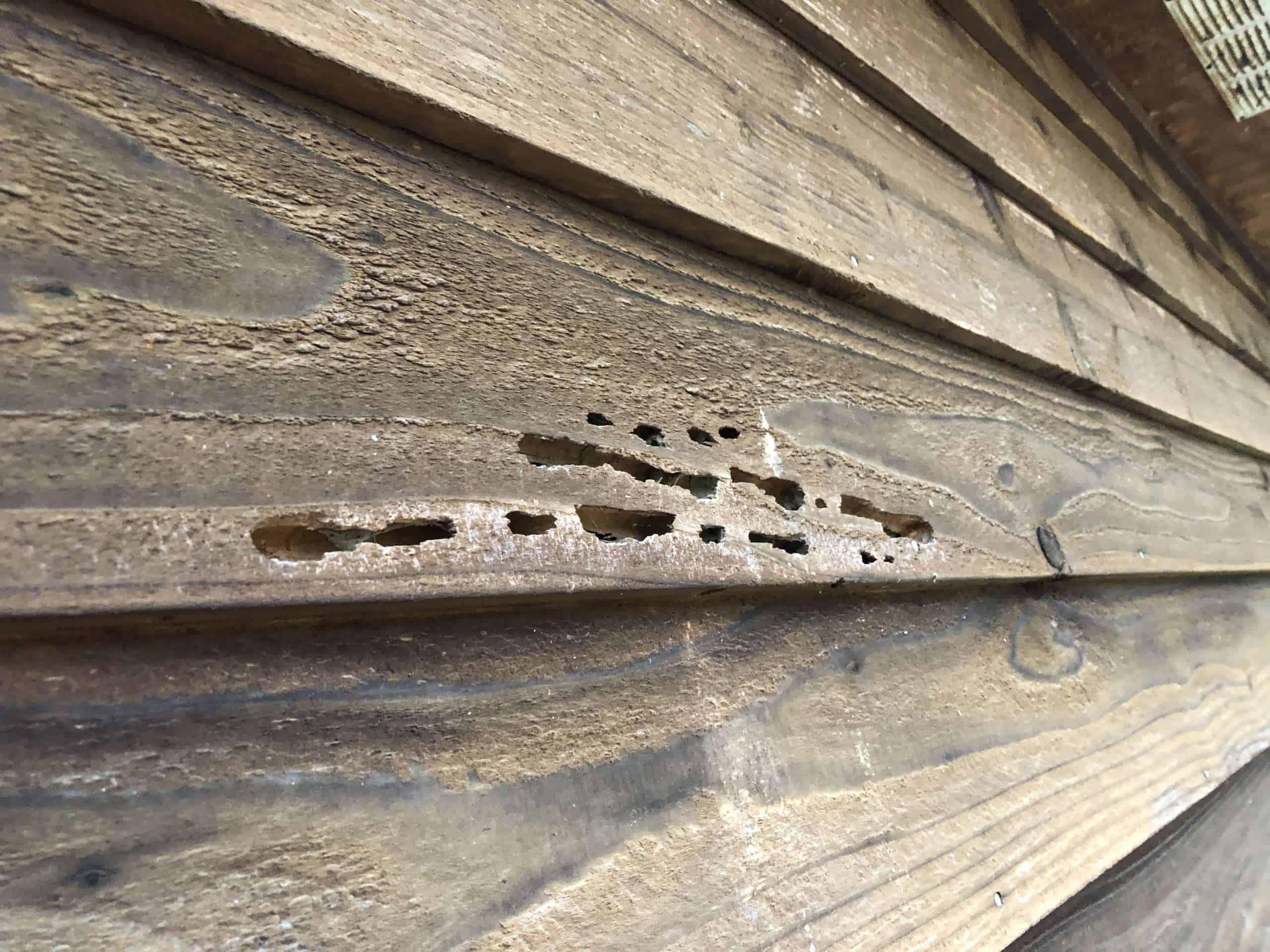 Siding with Termite Damage