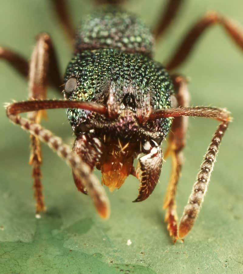 Exterminator Pest Control Ant Bug Free Service Tulsa Oklahoma Bed Bug Specialist Ants