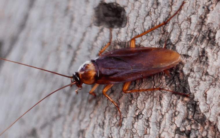 An Outdoor Cockroach