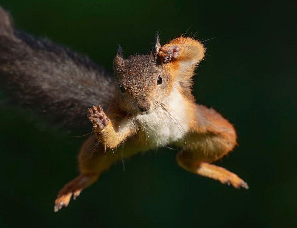 The Ninja Squirrel Attacks!