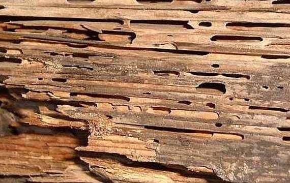 Exterminator Pest Control Termite Bug Free Service Tulsa Oklahoma Bed Bug Specialist Termites