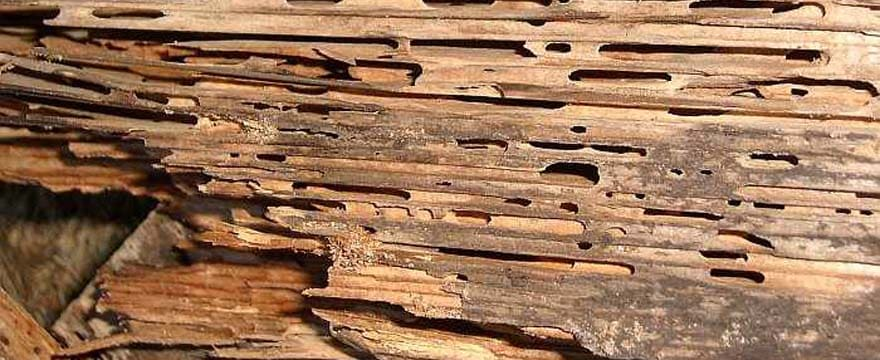 This is What Termites Can Do To Your Home!