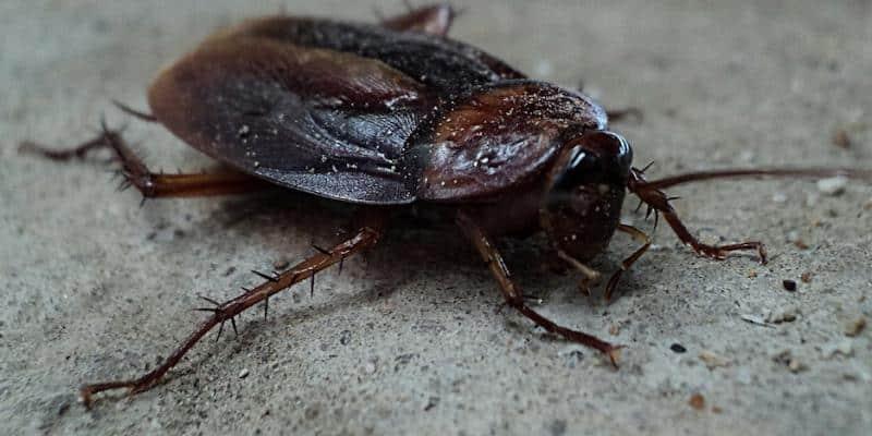 A Cockroach in the Rain