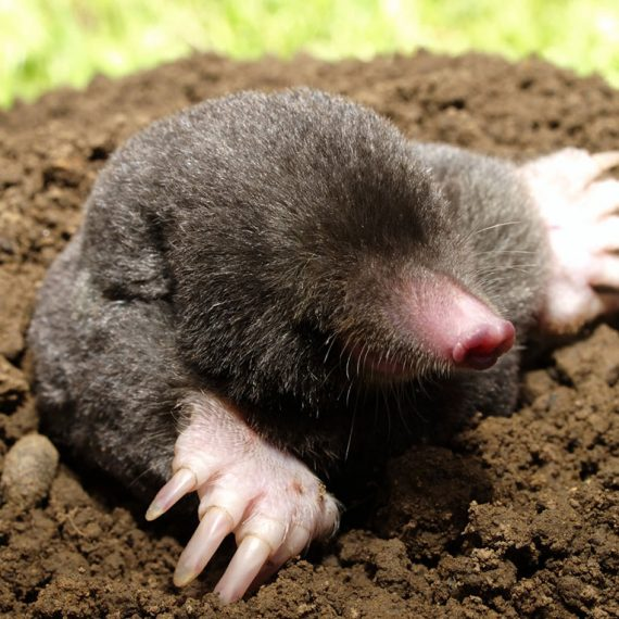 One cute mole