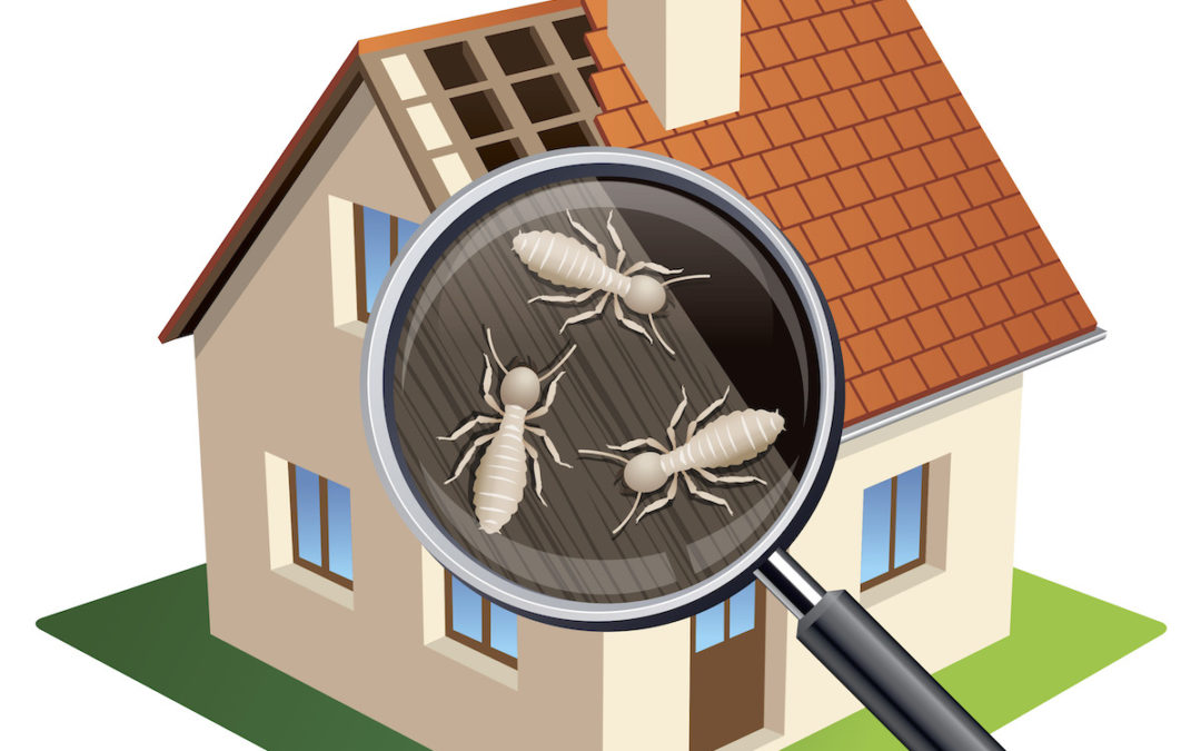 Termite Inspections are our specialty!