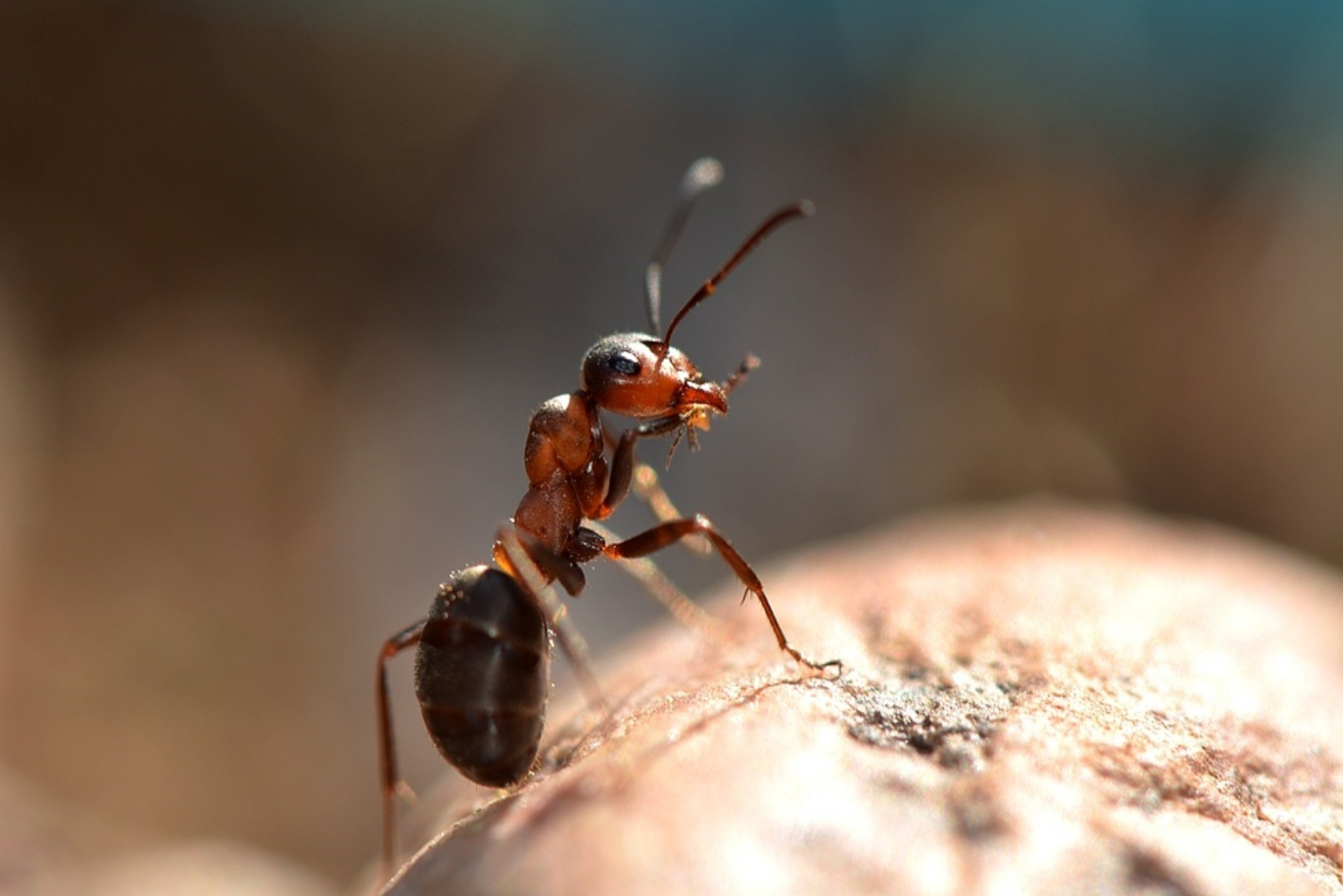 An Ant Eating