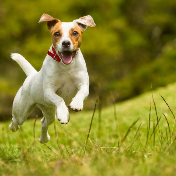 That is one happy dog!