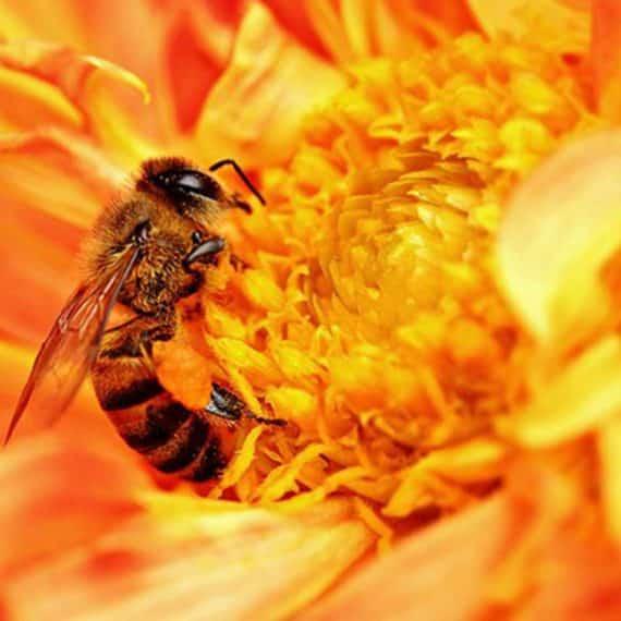 Exterminator Pest Control Bug Free Wasp Service Tulsa Oklahoma Yellow Jacket