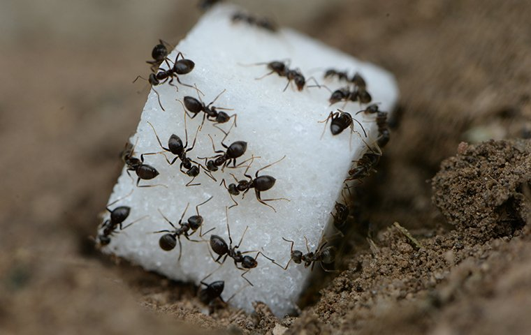 The Ants are Attacking!