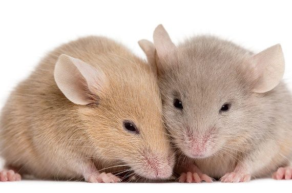 Mice can look cute, but not in your home or business!