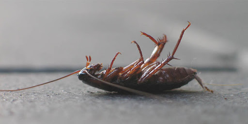 """The only good cockroach is a dead cockroach"" -TermMax Pest Control"