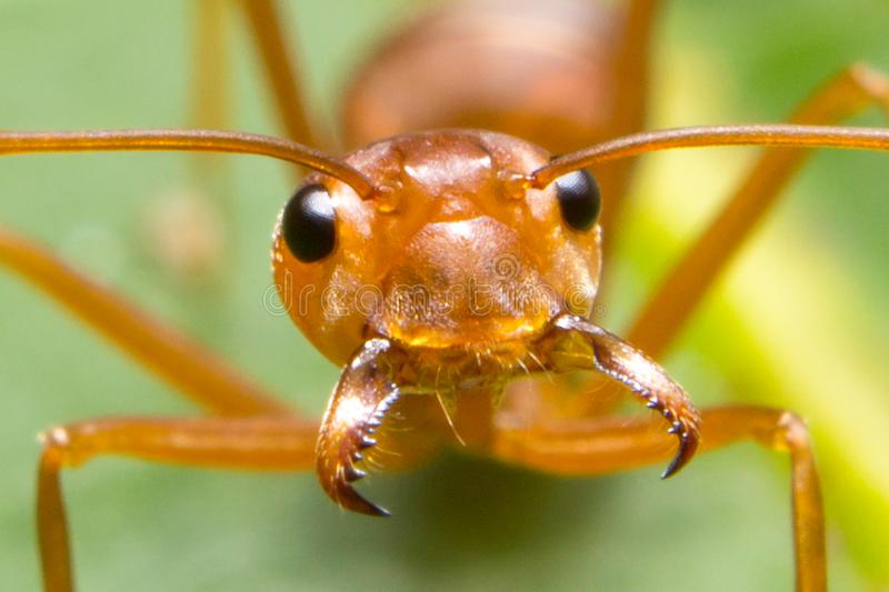 A Hungry Ant!