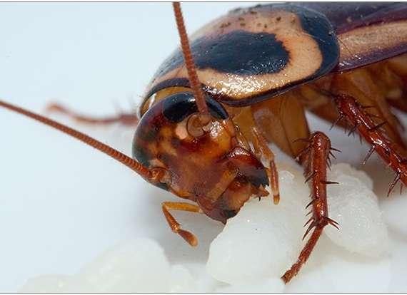 A Cockroach Bite