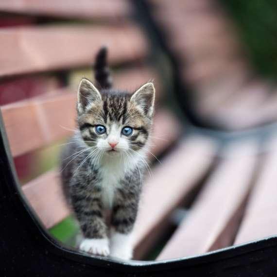A Baby Kitten